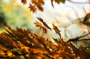 autumn-507544_1280
