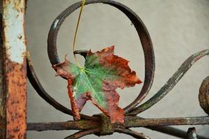 autumn-leaf-1646050_1280