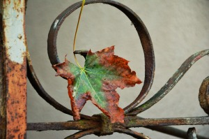 autumn-leaf-1646050_1280