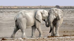 elephant-1170108_1280